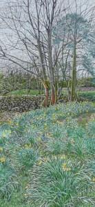 Daffodils, Orton, Cumbria