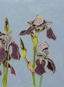 Bearded Iris 2