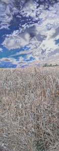Late Summer, Corn Field large