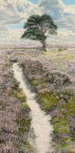 Purple Heather, north Yorkshire Moors