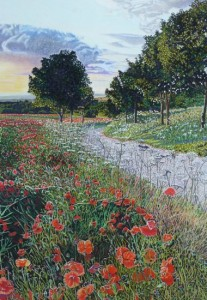 Wild Poppies, North Yorkshire