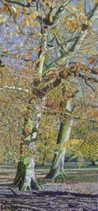 Beech Trees, Branston Park