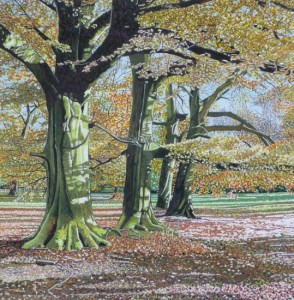 Beech Trees, Autumn, Branston Park