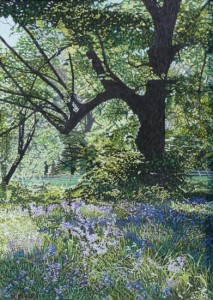 Bluebells, Branston Park