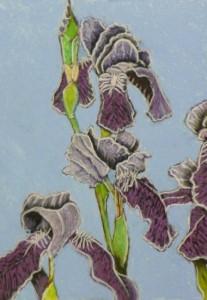 Bearded Iris 1