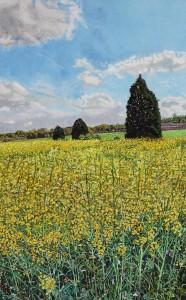 Oil Seed Rape, Blankney