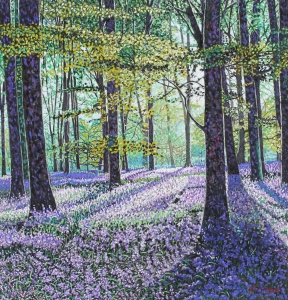 Bluebell Wood Early Morning